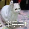 3002_1538825943_avatar