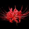 3002_1107575392_avatar
